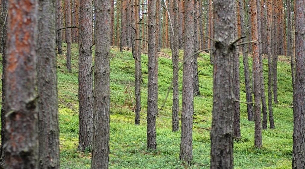 Fotografia lasu Nadleśnictwa Świętoszów