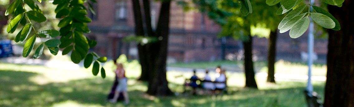 Zdjęcie parku.